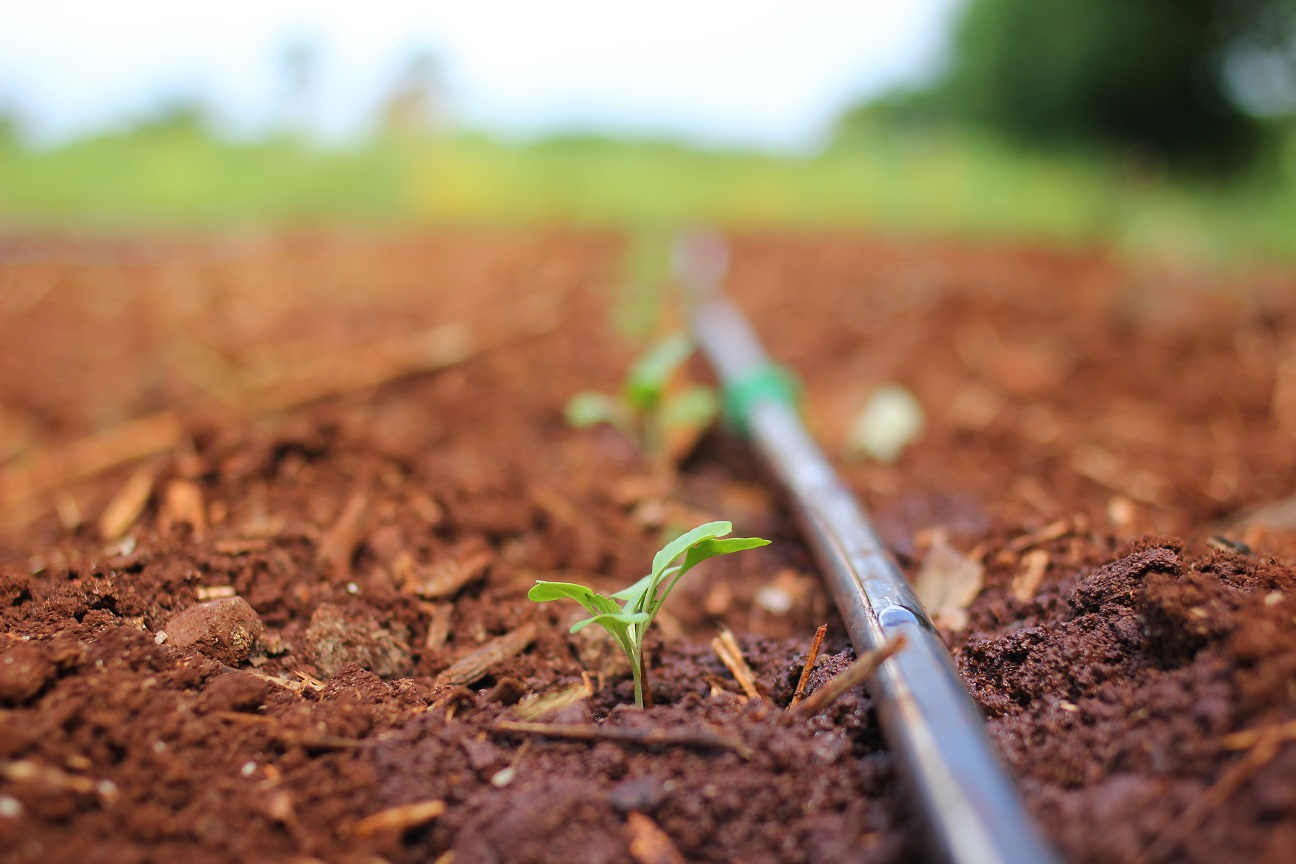 Backyard based urban farming project in brisbane startsomegood - Profitable crops small plots ...